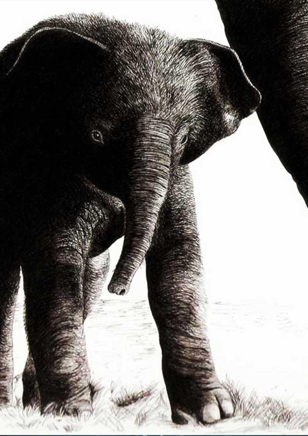 elefante-umbe